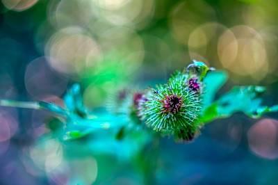 Arctium Lappa Photograph - Burdock Bloom Superstar by Claudia Kukulka