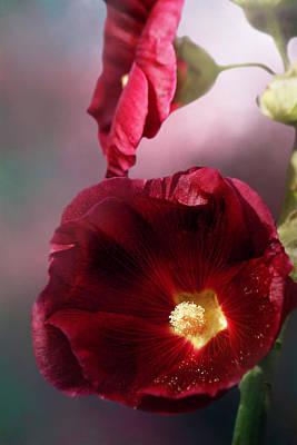 Photograph - Burgundy Hollyhock by Cindi Ressler