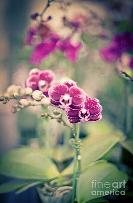 Photograph - Burgundy Orchids by Ana V Ramirez