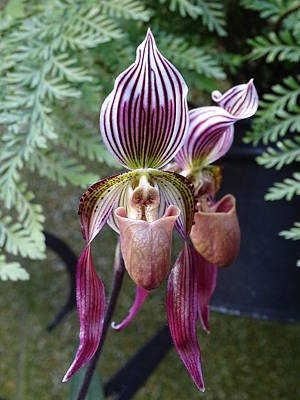 Target Threshold Nature - Burgundy Orchids with Stripes by Heather Jane