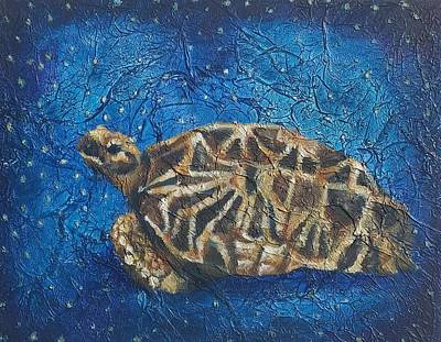 Burmese Star Tortoise Original by Micah Goguen