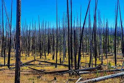 Photograph - Burned Forest In Yellowstone by Marilyn Burton