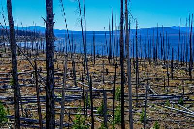 Photograph - Burned Trees By Yellowstone Lake by Marilyn Burton