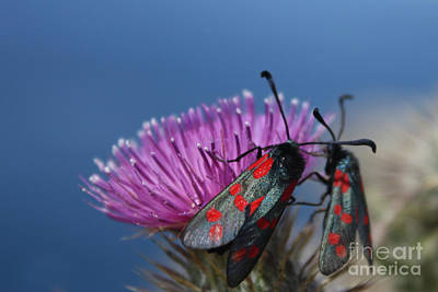 Photograph - Burnet Moths by Terri Waters