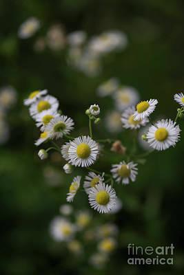 Photograph - Burnidge Florals 3 by David Bearden