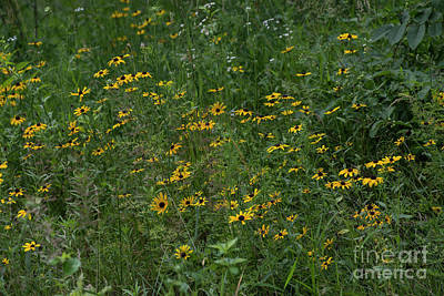 Photograph - Burnidge Florals 8 by David Bearden