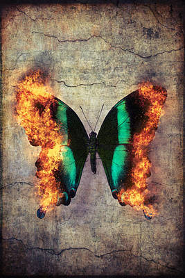 Burning Butterfly Art Print by Garry Gay