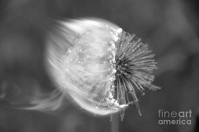Burning Dandelion Art Print by Ludmilla Resch