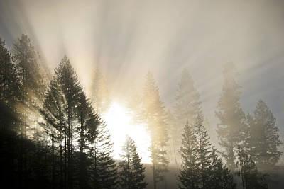 Photograph - Burning Through The Fog by Albert Seger