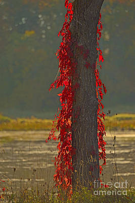 Petrie Island Photograph - Burning Tree by Joshua McCullough