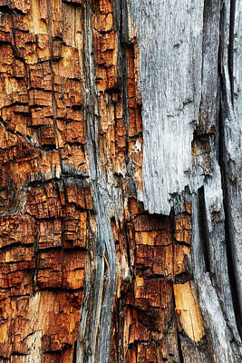 Photograph - Burnt Bark by David Beebe