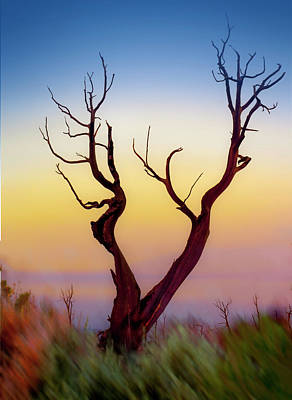 Photograph - Burnt Cedar At Sunset by Gary Warnimont