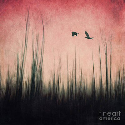 Corvidae Photograph - Burnt Ground by Priska Wettstein