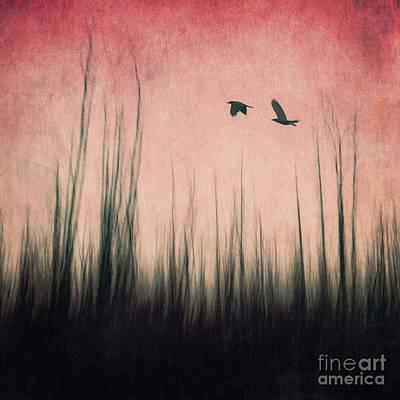 Blackbird Photograph - Burnt Ground by Priska Wettstein