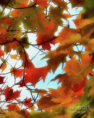 Photograph - Burnt Orange - Fall Background by Scott Cameron