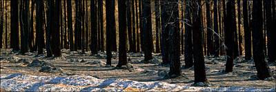 Burnt Pines Art Print