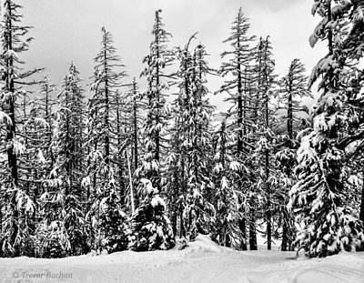 British Columbia Photograph - Burnt Whistler by Trevor Buchan
