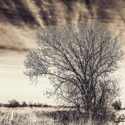 Photograph - Burr Oak Outshines Chemtrail Skies by Michael Oceanofwisdom Bidwell