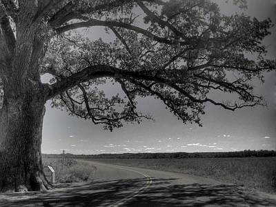 Old Country Roads Photograph - Burr Oak Tree by Jane Linders