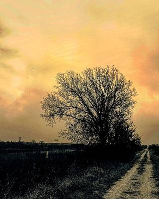 Photograph - Burr Oak With Drab Skies In Orange-sepia by Michael Oceanofwisdom Bidwell