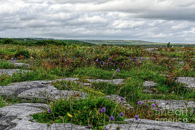 Photograph - Burren Beauty by Elvis Vaughn