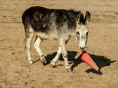 Burro Playing With Safety Cone Art Print by Elizabeth Hershkowitz