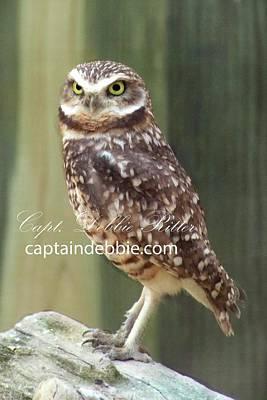 Photograph - Burrowing Owl 1 by Captain Debbie Ritter