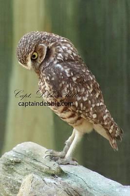 Photograph - Burrowing Owl 2 by Captain Debbie Ritter