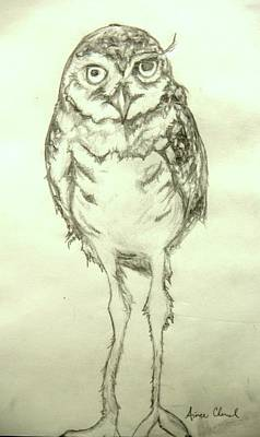 Burrowing Drawing - Burrowing Owl by Aimee Chenal
