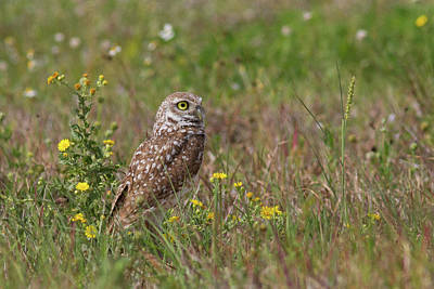 Mannequin Dresses Rights Managed Images - Burrowing Owl and Flowers Royalty-Free Image by Paul Rebmann