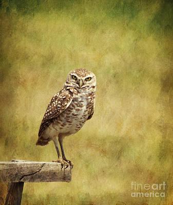 Photograph - Burrowing Owl Athene Cunicularia by Liz Leyden