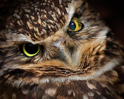 Photograph - Burrowing Owl by Brian Brandt