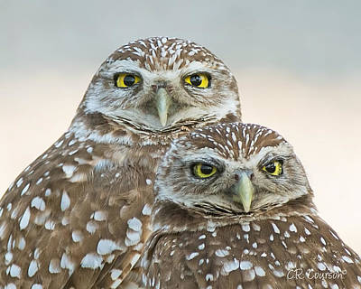 Photograph - Burrowing Owl Couple by CR  Courson