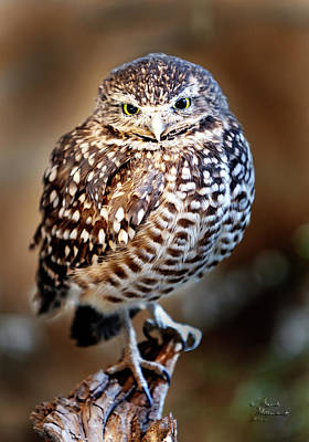 Photograph - Burrowing Owl by David Millenheft
