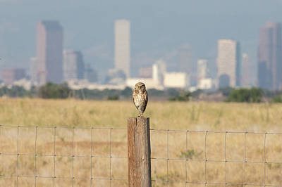 Photograph - Burrowing Owl Guards The Mile High City by Tony Hake
