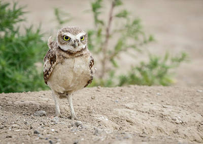 Photograph - Burrowing Owl Habitat by Athena Mckinzie