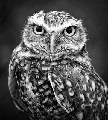 Burrowing Owl In Black And White Art Print by Athena Mckinzie