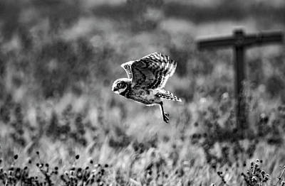 Clouds Rights Managed Images - Burrowing Owl in Flight Royalty-Free Image by Tracy Winter