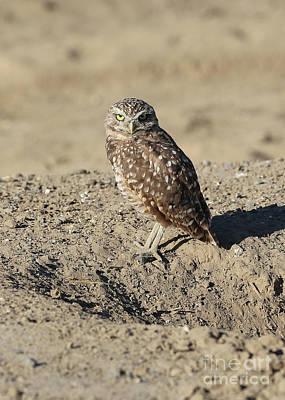 Burrowing Owl In The Dirt Art Print