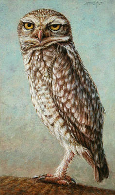 Texas Drawing - Burrowing Owl by James W Johnson