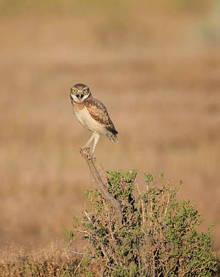 Photograph - Burrowing Owl Joy by Loree Johnson
