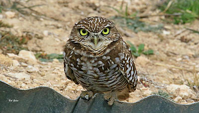 Photograph - Burrowing Owl Mug by Bob Zeller