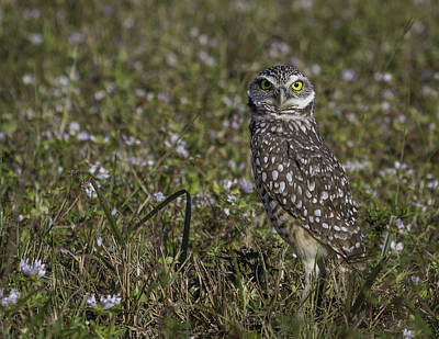 Photograph - Burrowing Owl On Guard by Elizabeth Eldridge