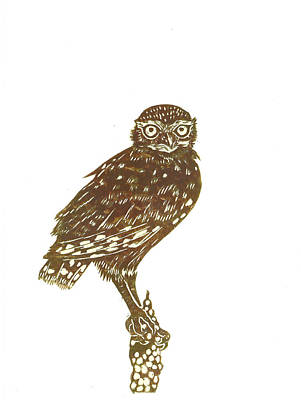 Drawing - Burrowing Owl On Mullein by Dawn Senior-Trask