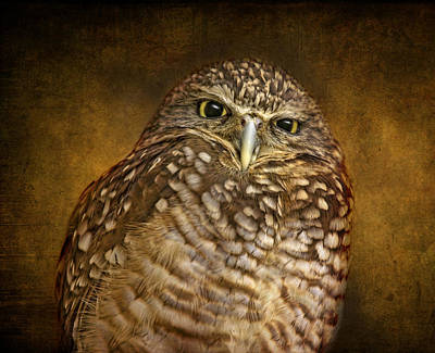Photograph - Burrowing Owl by Pat Abbott