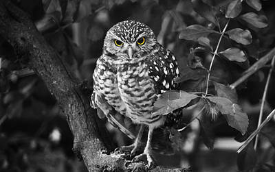 Photograph - Burrowing Owl  Selective Color Eyes by Judy Wanamaker