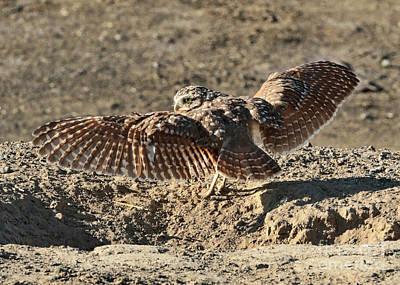 Burrowing Owl Wings Art Print