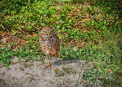 Nature Photograph - Burrowing Owl With A Burrowing Stare by John M Bailey