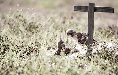 Photograph - Burrowing Owls At Play by Tracy Winter