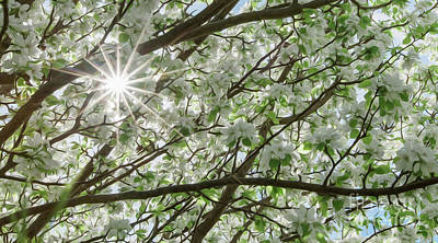 Photograph - Burst of Spring by Svetlana VanKempen